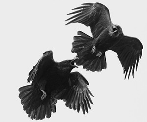 black &white, gothic, and raven image