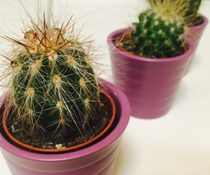 cactus, decoration, and dessert image