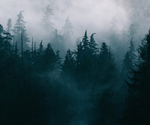 empty, fog, and forest image