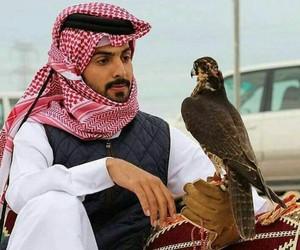 arab, arabic, and falcon image