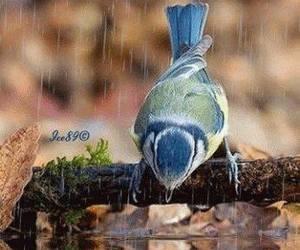 animals, birds, and rain image