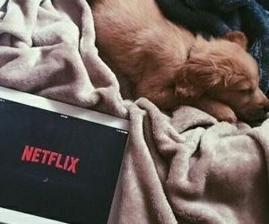 netflix, dog, and puppy image
