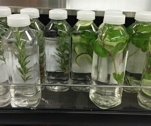 green, plants, and water image