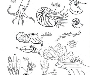 art, ocean life, and sketches image