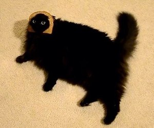 cat, funny, and bread image
