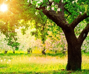 tree, spring, and green image