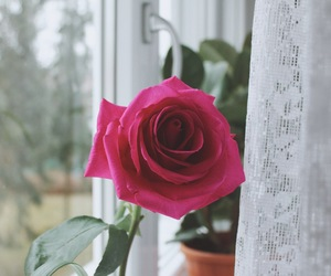 home decor, pink, and rose image