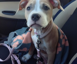 blue, bully, and car image