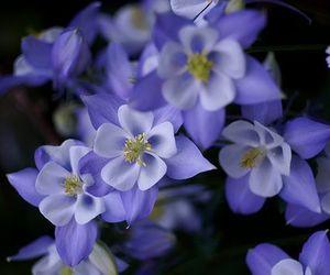 blossom, dark, and flowers image