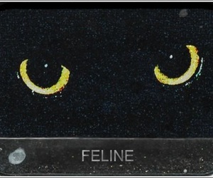 cat, feline, and eyes image