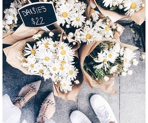 flowers, daisy, and fashion image