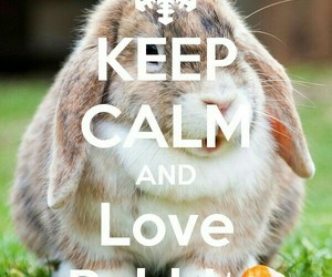 animals, bunny, and funny image