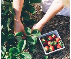garden, green, and strawberries image