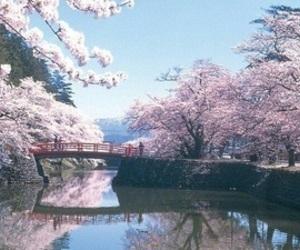 bridge, japan, and lake image