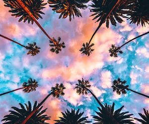 sky, palms, and clouds image