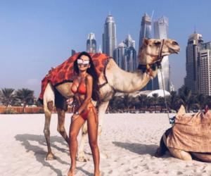 animal, Dubai, and summer image
