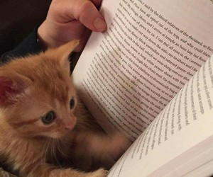 book, cute, and cat image
