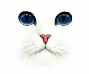 cat, background, and white image