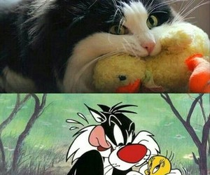 cat, funny, and cartoon image