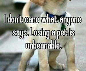 animals, sad, and love image