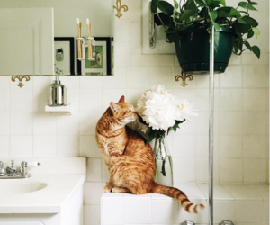 bathroom, plant, and cat image