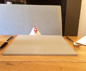 Chicken, meme, and reaction image