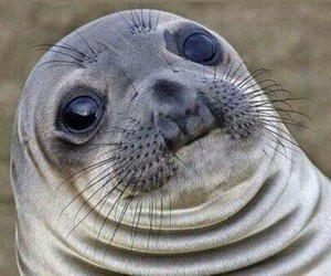 seal and funny image