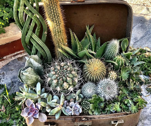 botany, cactus, and succulent image