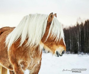 horses, winter, and ardenner image