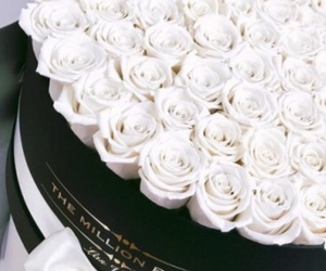 box, roses, and white image