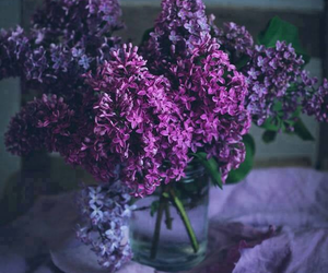 flowers, lilac, and purple image
