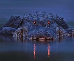 free, animals, and cocodrile image