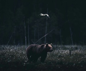 bear, beauty, and contrast image