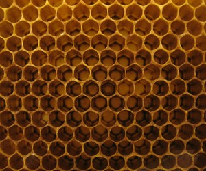 golden, honeycomb, and texture image