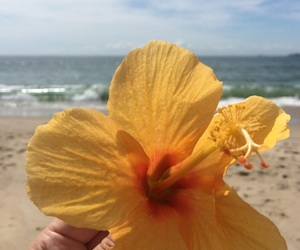 beach, flower, and peace image