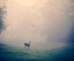 deer, animal, and fog image