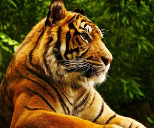tigre and tranquilidad image