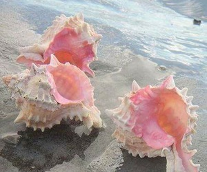 pink, sea, and shell image