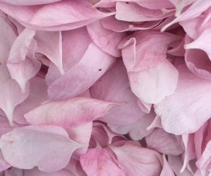 flower, pink, and softly image