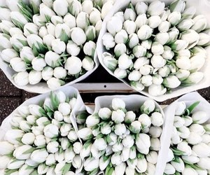 flowers, white, and tulips image