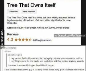 awesome, funny, and tree image