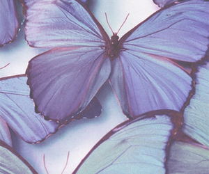 butterly, photography, and pictures image