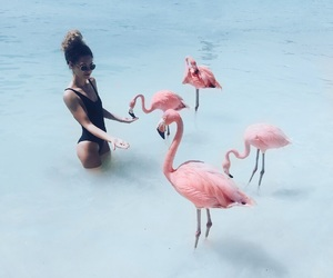 beach, flamingo, and aruba image