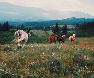 horse, nature, and mountains image