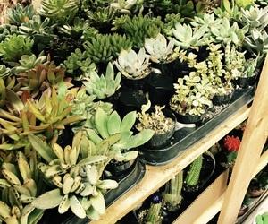 cacti, garden, and green image