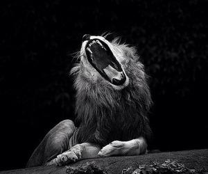 mr. lion image