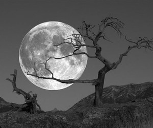 moon, tree, and black and white image