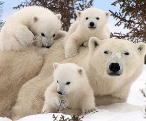 animal, bear, and family image