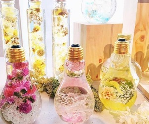 beauty, bulb, and spring image