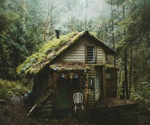 green, forest, and house image